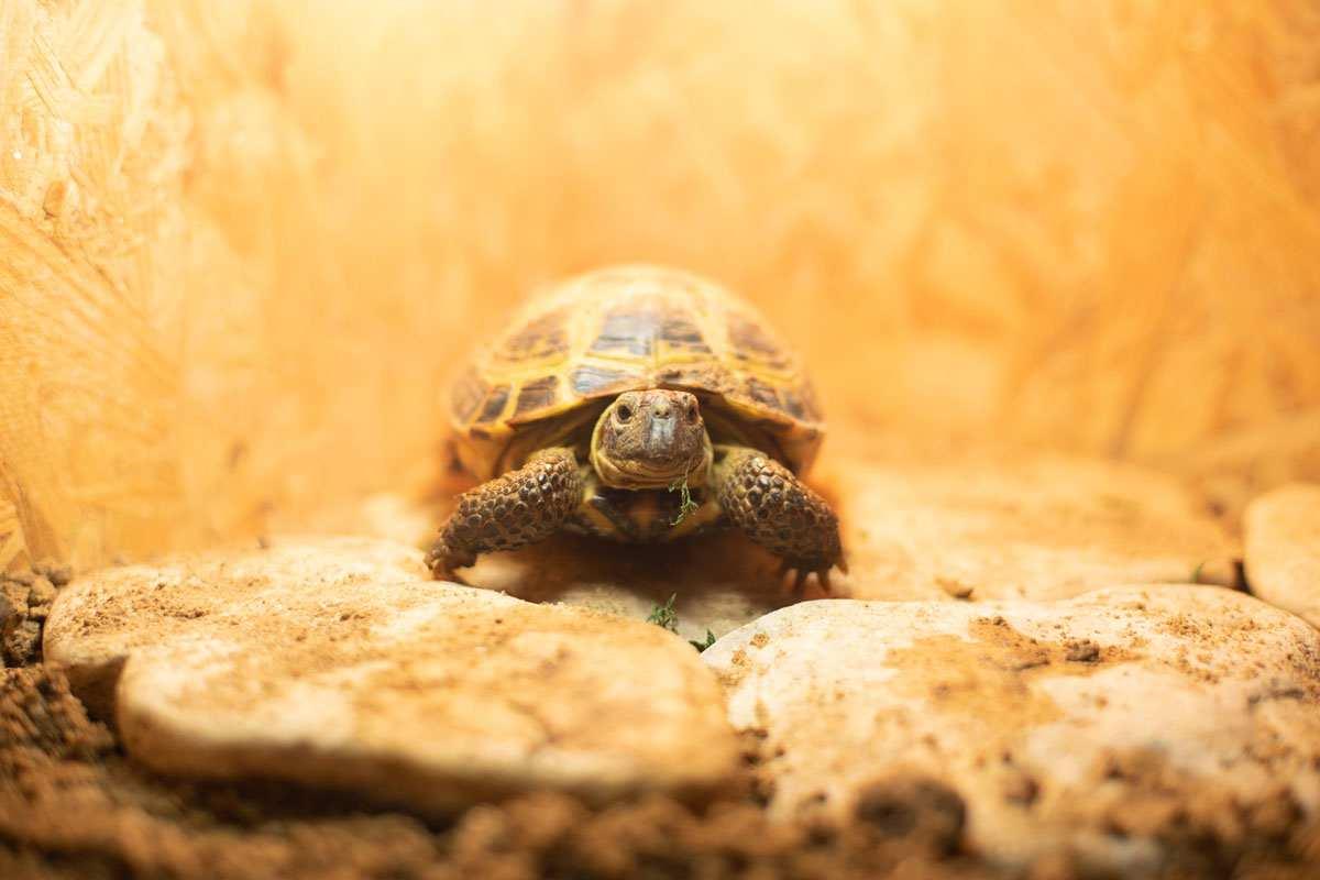 Картинки для террариума среднеазиатской черепахи