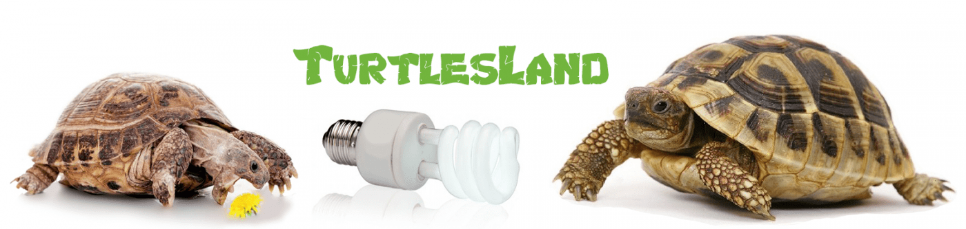 TurtlesLand